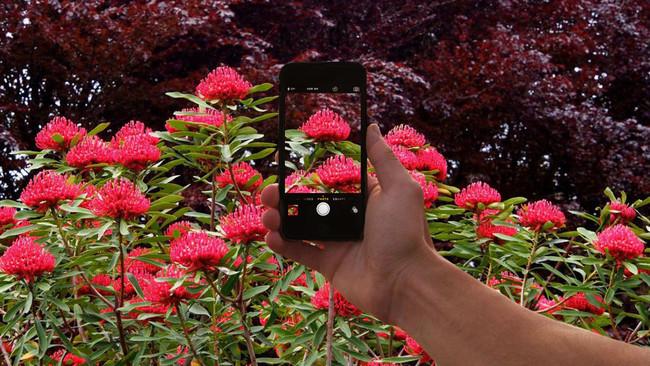 Shazam Plants
