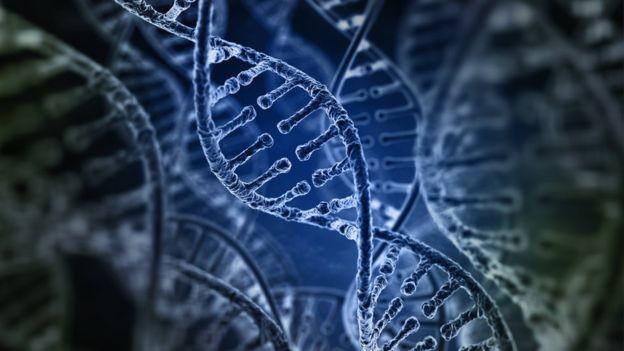 97690299 Genomaadn485038074
