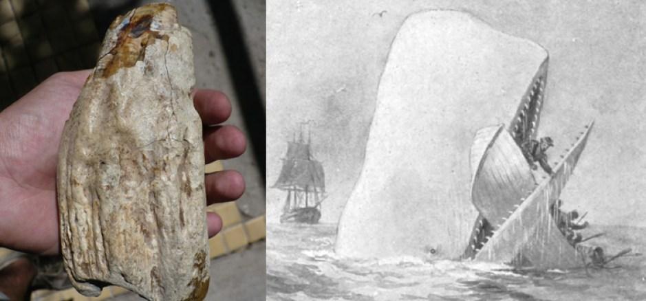 Diente de la bestia marina de Río Negro junto a una ilustración de Moby-Dick de Augustus Burnham Shute para la edición de 1892