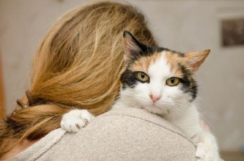 Los gatos copian rasgos de la personalidad de sus dueños