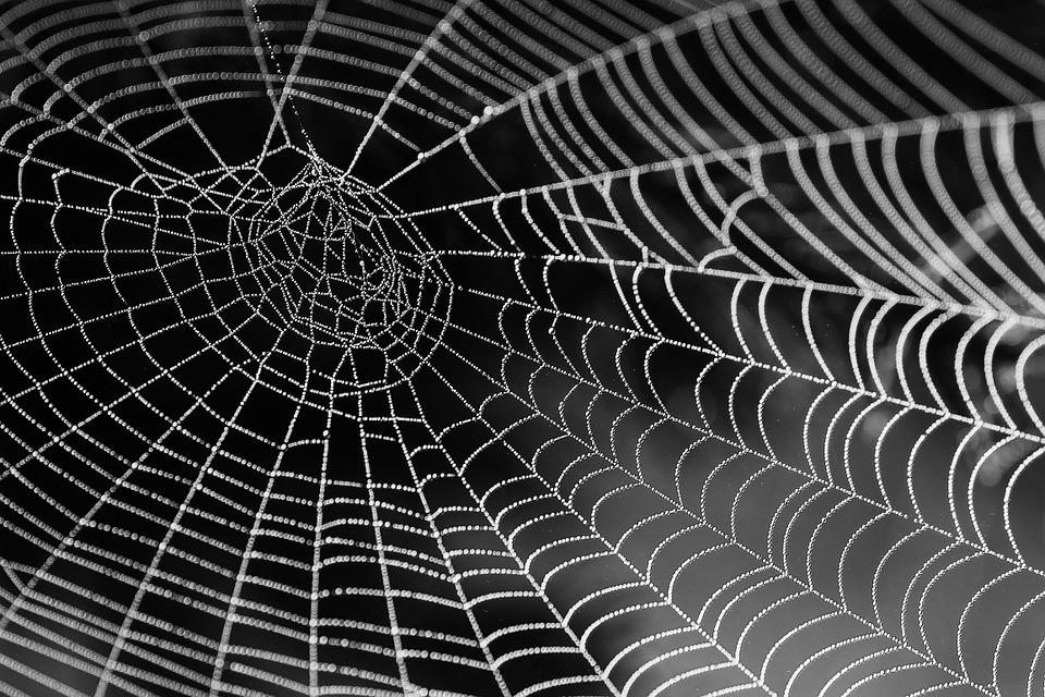 ¿Tela de araña como músculo robótico? Sí, es posible