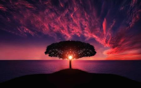 Tree 736885 960 720