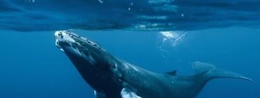 El animal más grande de todos los tiempos equivale a la masa de 3.333 personas