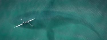 La memoria de las ballenas azules es lo que permite que encuentren comida