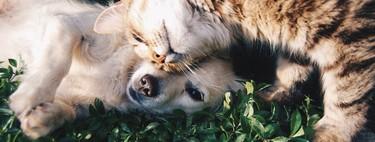 Los perros no solo están hechos para ser sociables con humanos sino con otras especies