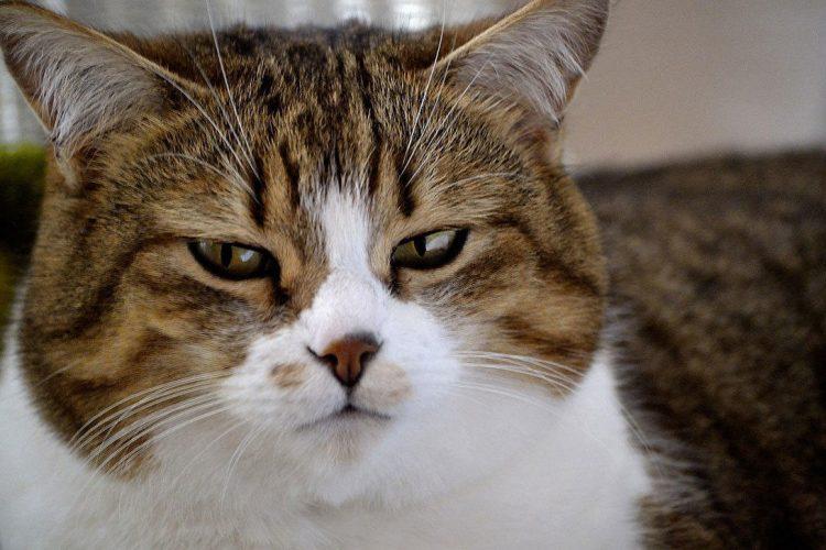 ¿Qué actitud adoptar en plena epidemia de coronavirus en caso de tener a una mascota?