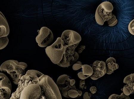 Se encuentra por casualidad la primera bacteria que se alimenta de manganeso