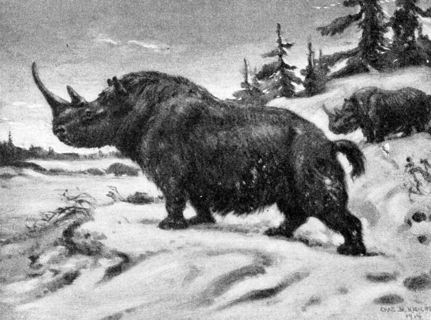 Fue el cambio climático, y no la caza excesiva, lo que extinguió a los rinocerontes lanudos