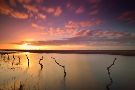 51 años del Parque Nacional de Doñana