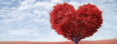 La tierra que se trajo una persona que estaba de vacaciones en Noruega y facilitó los trasplantes de corazón